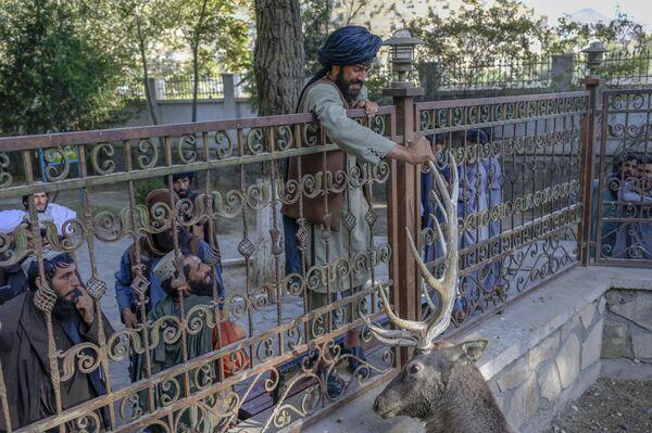 Боец Талибана* касается оленя в вольере в Кабульском зоопарке. - Sputnik Абхазия