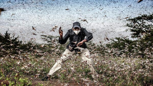 Снимок Нашествие саранчи испанского фотографа Луиса Тато, победивший в категории Моя Планета, серии конкурса имени Стенина - Sputnik Аҧсны