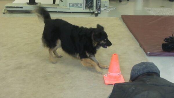 На диагностику к собаке: американские ученые учат четвероногих выявлять рак - Sputnik Абхазия