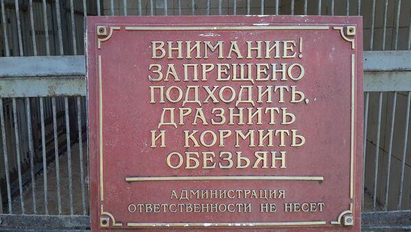 Обезьяна наказала посетителей питомника за беспечность - Sputnik Абхазия