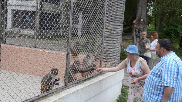 Посетители и обитатели питомника обезьян познакомились друг с другом - Sputnik Абхазия
