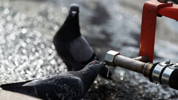 Голубь у фонтана. Архивное фото. - Sputnik Абхазия