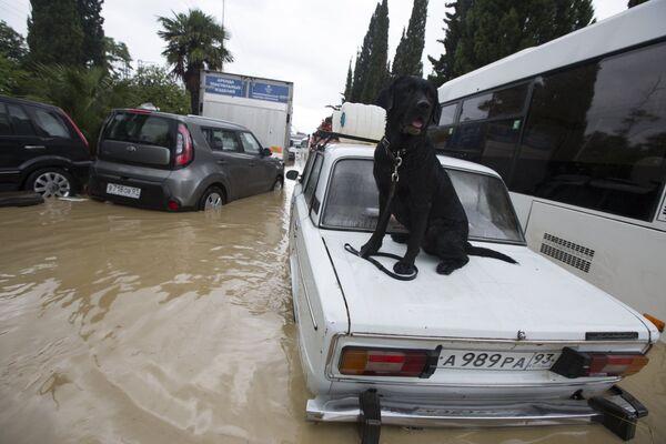 Сочи затопило из-за проливных дождей. - Sputnik Абхазия