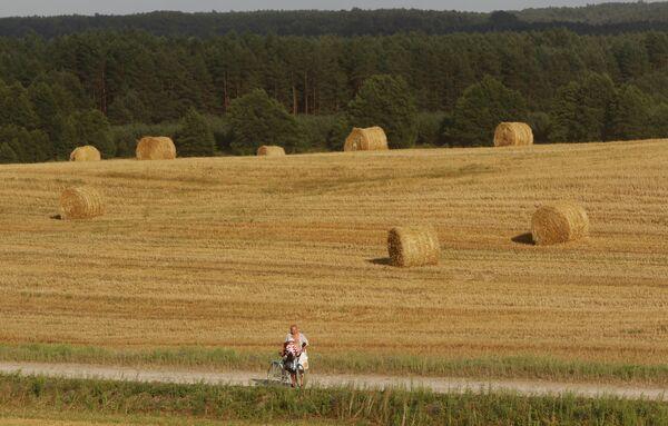 Уборка зерновых в Белоруссии - Sputnik Абхазия