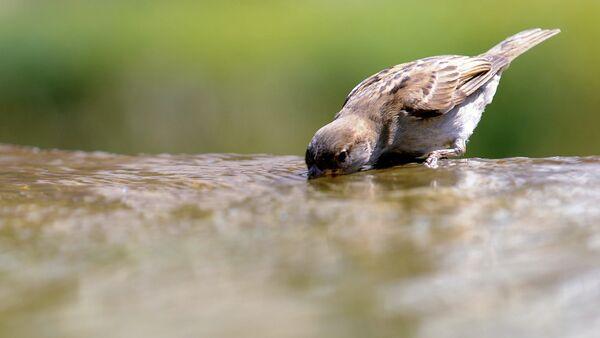 Птица пьет воду. - Sputnik Абхазия