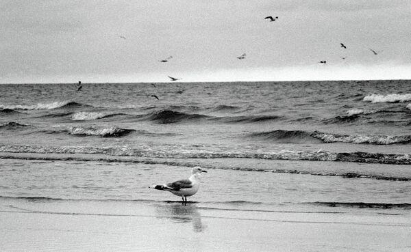 Чайка на побережье Балтийского моря - Sputnik Абхазия