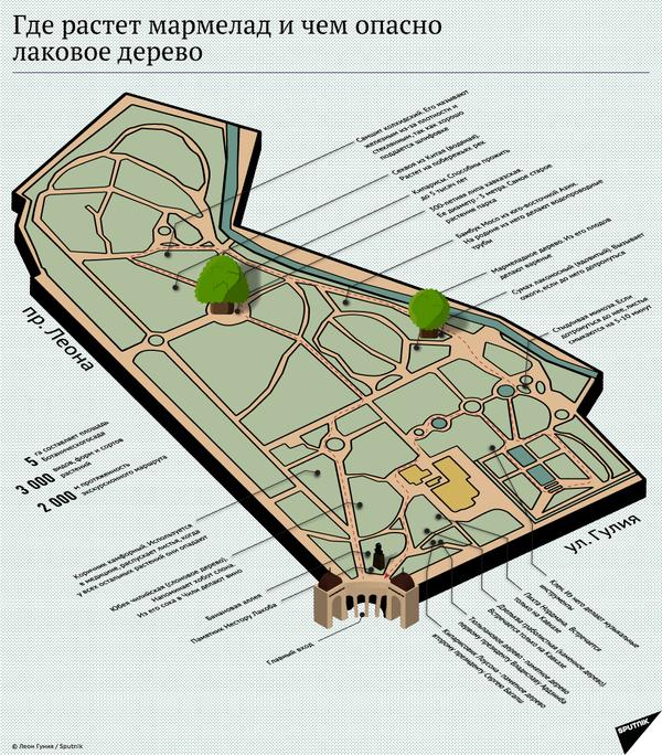 Где растет мармелад и чем опасно лаковое дерево - Sputnik Абхазия