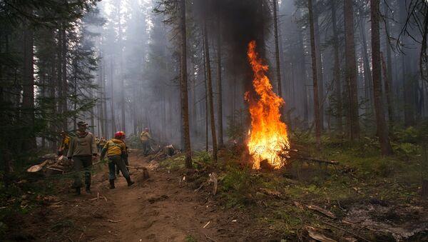 Лесные пожары в Бурятии - Sputnik Абхазия