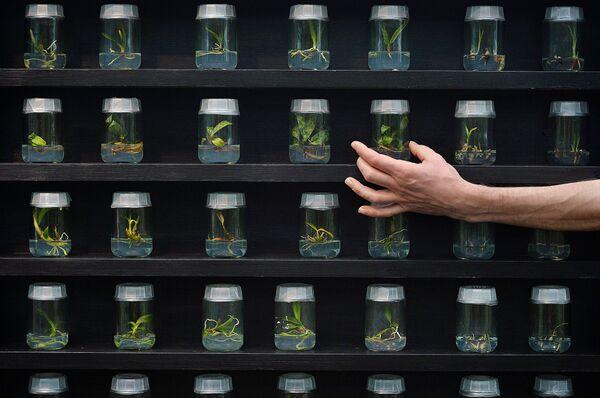 Саженцы в Королевском ботаническом саду в  Лондоне. - Sputnik Абхазия
