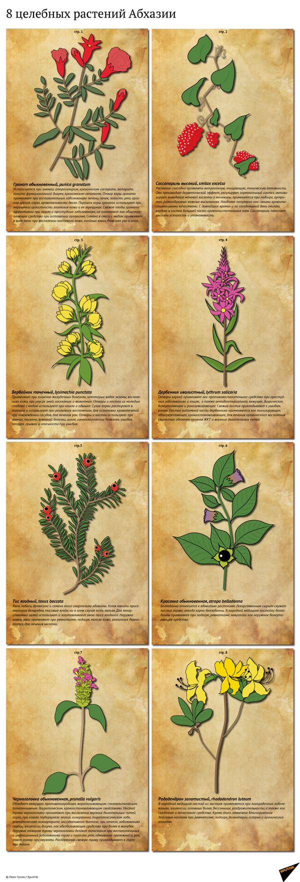 8 целебных растений Абхазии - Sputnik Абхазия