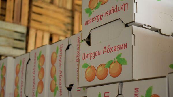 Цитрусы Абхазии. - Sputnik Абхазия