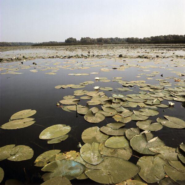 Алания: болотные угодья необходимы самой природе. - Sputnik Абхазия