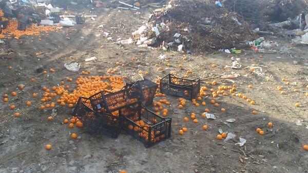 Cанкционные мандарины во Владикавказе раздавили бульдозером - Sputnik Абхазия
