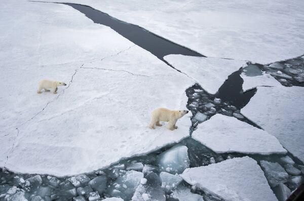 Арктическая экспедиция Кара-зима 2015. Архивное фото - Sputnik Абхазия