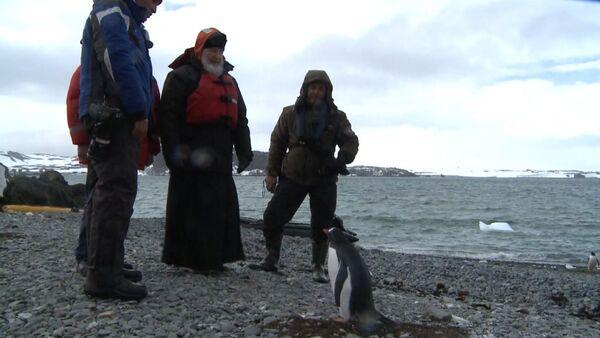 Патриарх Кирилл с полярниками погулял среди пингвинов по берегу Антарктиды - Sputnik Абхазия