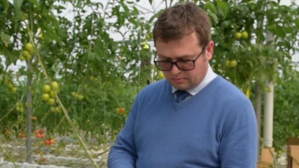 Геннадий Берулава рассказал как выбрать экологически чистые помидоры - Sputnik Абхазия
