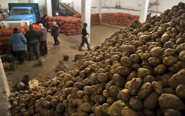 Картофель в овощехранилище. Архивное фото. - Sputnik Абхазия