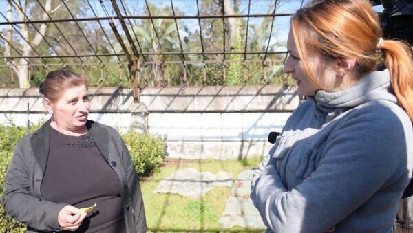 Саженцы мандаринов и фейхоа бесплатно получили более 70 семей Абхазии - Sputnik Абхазия