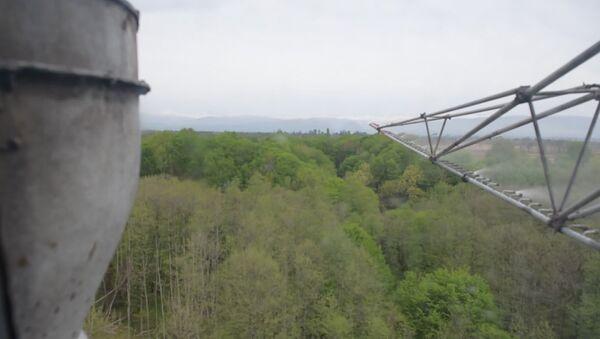 Самшитовую огневку уничтожают с воздуха - Sputnik Абхазия