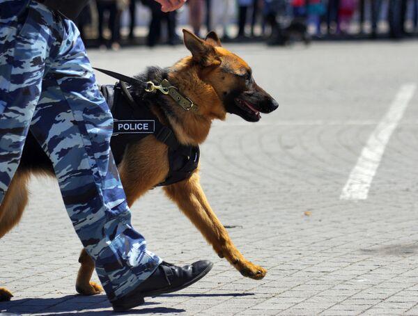 Показательные выступления сотрудников МВД в Севастополе - Sputnik Абхазия