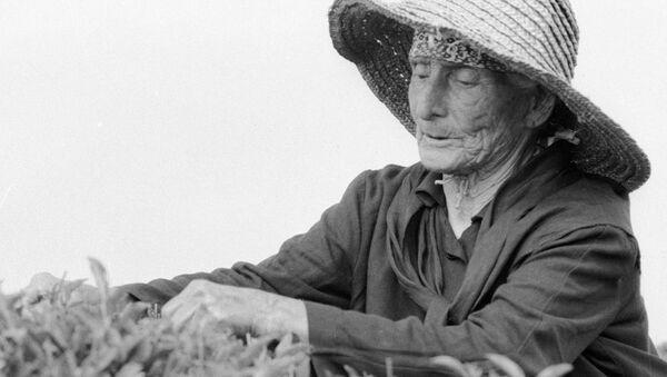 Старейшая женщина Абхазии на чайной плантации - Sputnik Абхазия