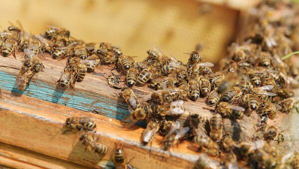 Пчеловодство в Абхазии - Sputnik Абхазия