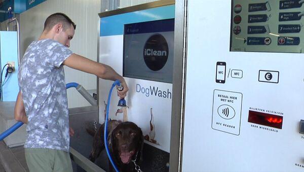 Ванная для собак, или Как в Нидерландах моют питомцев вместе с машинами - Sputnik Абхазия