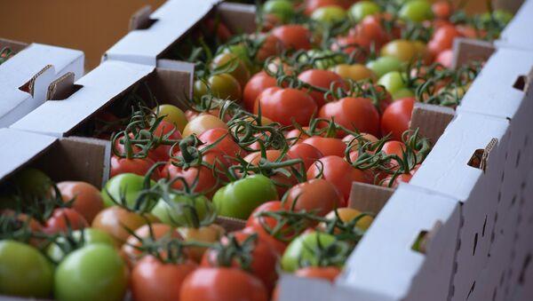 Сотрудницы  фирмы Пикан Аваи Агро фасуют помидоры перед отправкой в торговые сети - Sputnik Абхазия