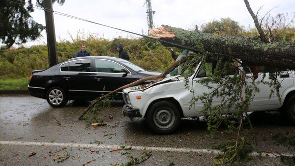 Последствие сильного ветра в Сухуме - Sputnik Абхазия