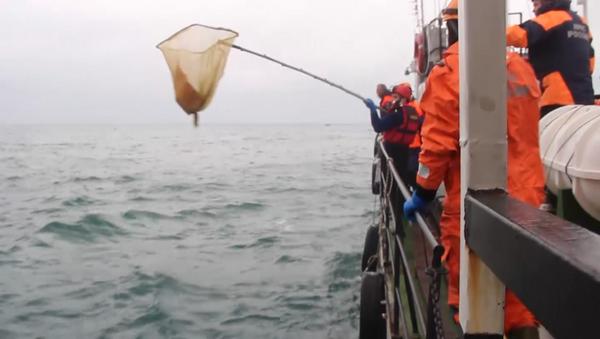 Спасатели на кораблях и вертолетах искали обломки Ту-154 в Черном море - Sputnik Абхазия