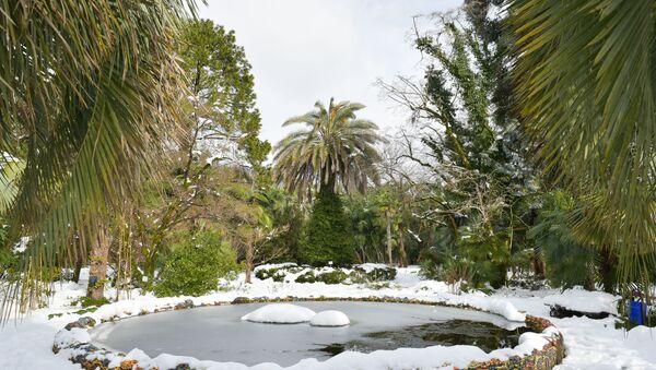 Растения в ботаническом саду после снегопада в Абхазии - Sputnik Абхазия