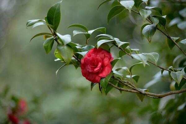 Весенние цветения - Sputnik Абхазия