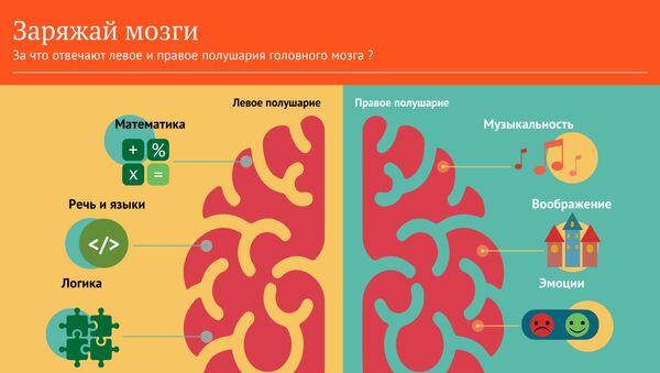 За что отвечают левое и правое полушарие нашего мозга - Sputnik Абхазия