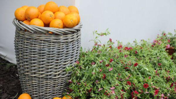 Апельсины на Московском международном фестивале садов и цветов - Sputnik Абхазия