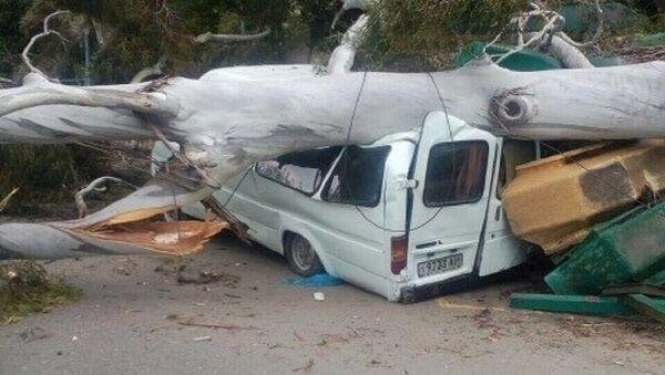 Эвкалипт упал на маршрутку в Гагре - Sputnik Абхазия
