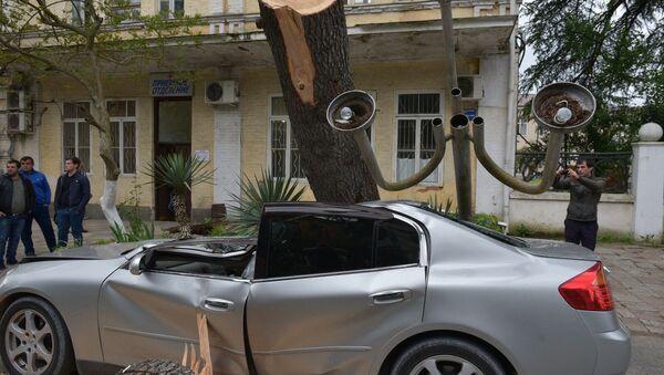 Дерево упало и повредило автомобиль в Сухуме - Sputnik Абхазия