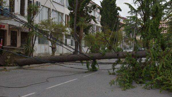 Ураган повалил деревья в Сухуме - Sputnik Абхазия
