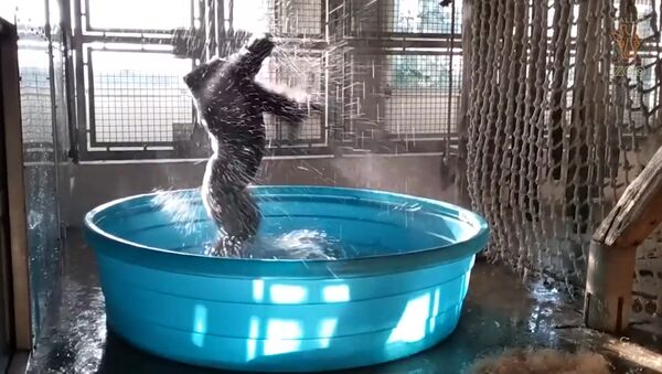 Танцующая горилла - Sputnik Абхазия
