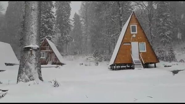 Ауадхара в снегу: кадры зимней Абхазии - Sputnik Абхазия