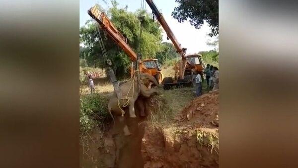 В Индии спасли упавшую в пустой колодец слониху - Sputnik Абхазия