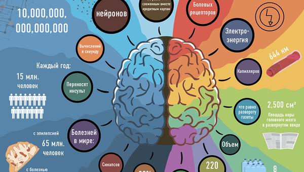 На что способен человеческий мозг - Sputnik Абхазия