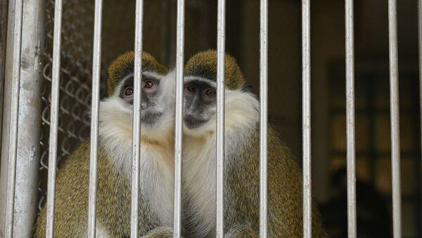 Сухумский обезьяний питомник  - Sputnik Абхазия