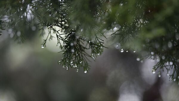 Прогноз,дождь - Sputnik Абхазия