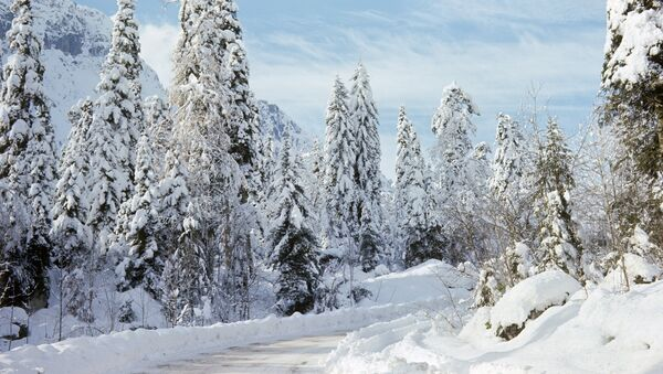 Дорога на озеро Рица зимой - Sputnik Абхазия