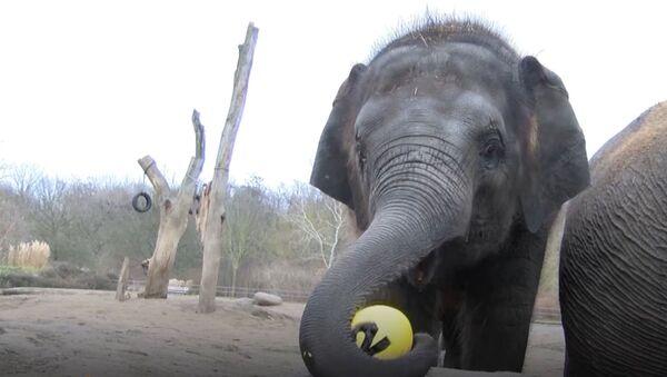 Слоненок Эдгар в берлинском зоопарке отпраздновал двухлетие - Sputnik Абхазия