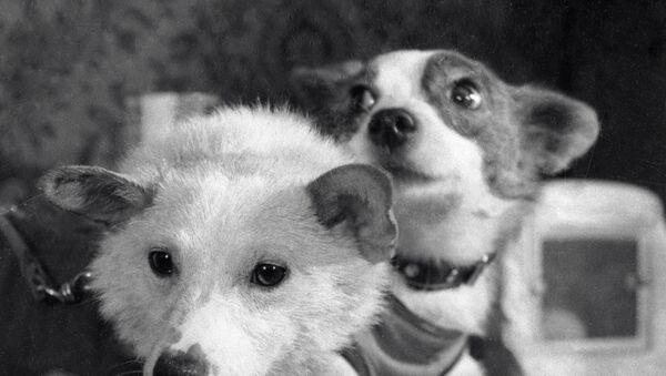 Четвероногие космонавты - собаки Белка и Стрелка после полета на космическом корабле-спутнике - Sputnik Абхазия
