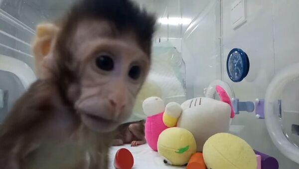 Китайские ученые показали первых в мире клонированных приматов - Sputnik Абхазия