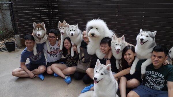 Кафе с собаками в Бангкоке - Sputnik Абхазия