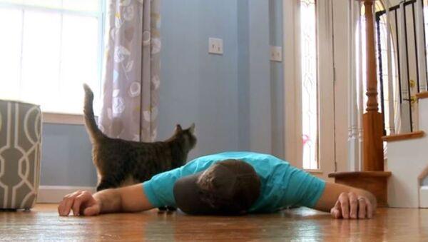 Мужчина разыграл кота, притворившись мертвым - Sputnik Абхазия