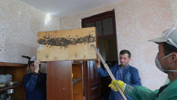 Крылатый ужас:  как в Абхазии  уничтожают мраморного клопа - Sputnik Абхазия